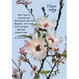 Hope Scripture Greeting Card from Israel